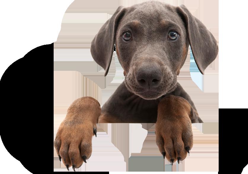 Hundewelpe - Verlassen Sie sich auf Bianca Jost Hundebetreuung in Hamburg
